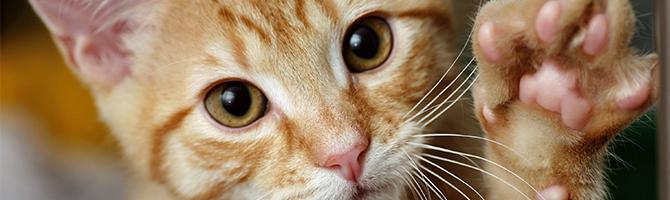 Opvoeding van uw kitten