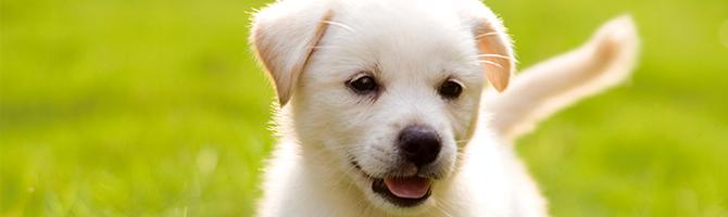 De opvoeding van uw puppy